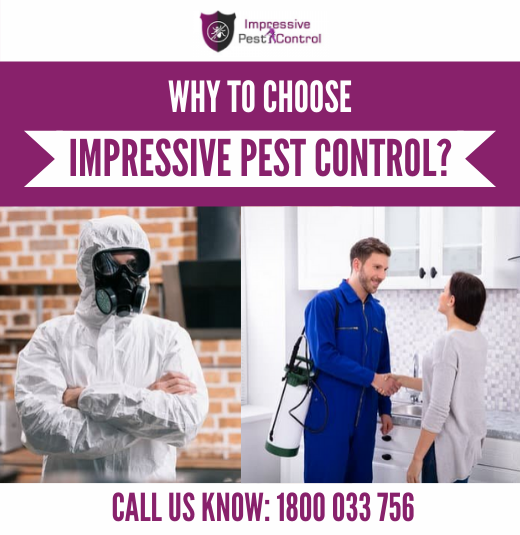 Why Hire Impressive Pest Control?