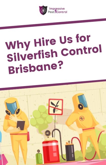 why hire impressive silverfish control Brisbane