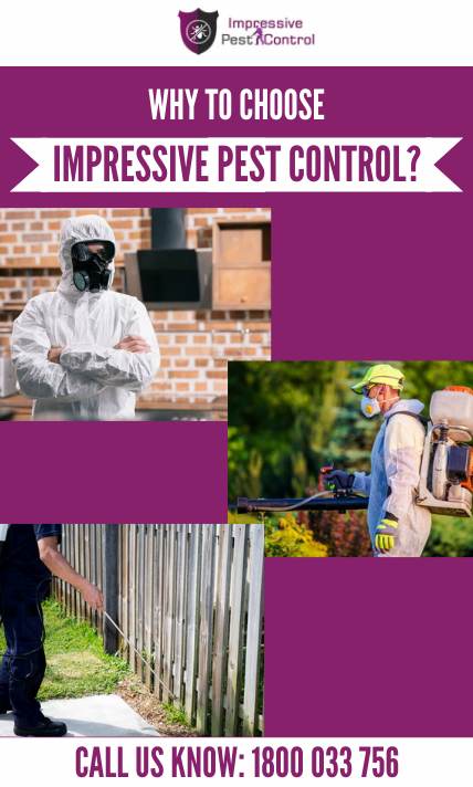 why choose impressive cockroach control melbourne