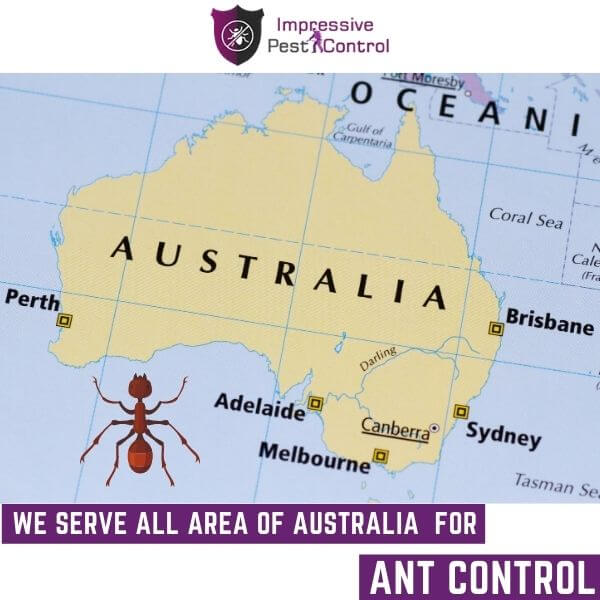 Areas We serve for ant contol