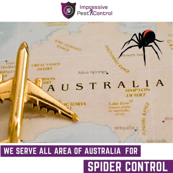 Areas We serve for spider control