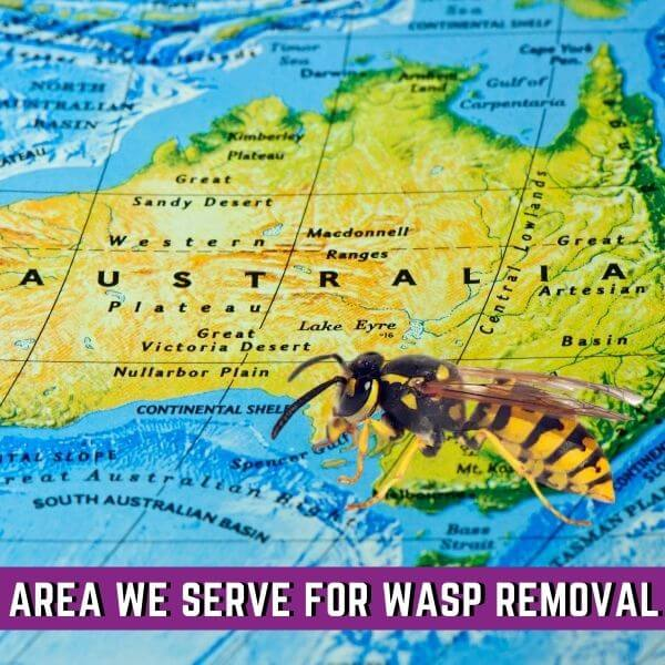 Areas We serve for wasp removal