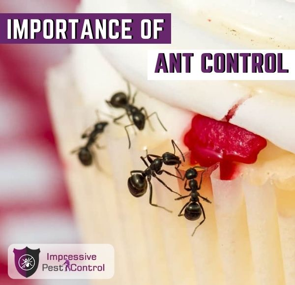 importance of ant control melbourne