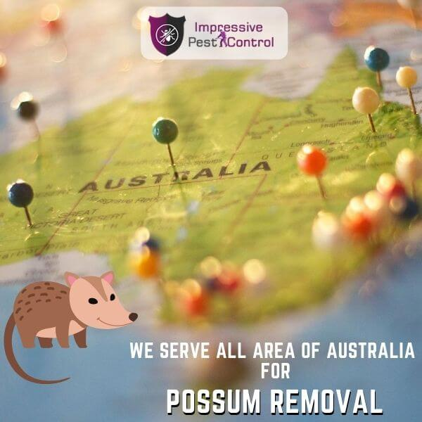 Areas We serve for possum removal