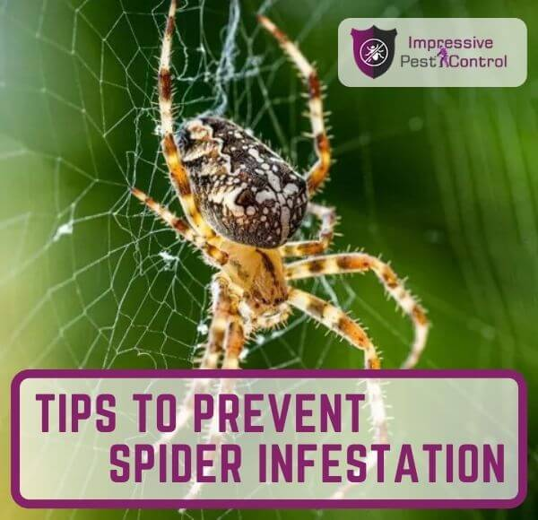 Prevention Tips for Spider Control melbourne