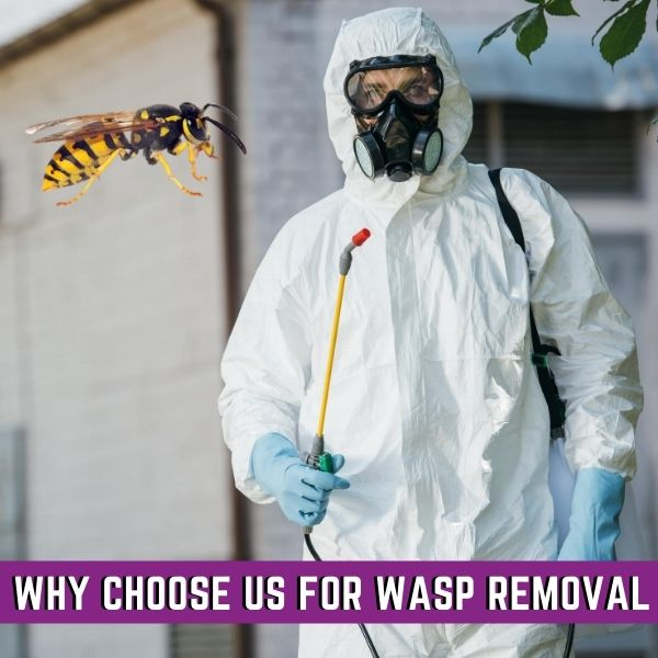 Why Hire Impressive wasp removal melbourne
