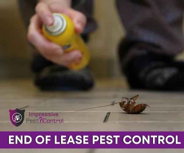end of lease pest control Buderim