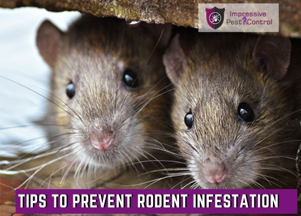 tips to prevent rodent