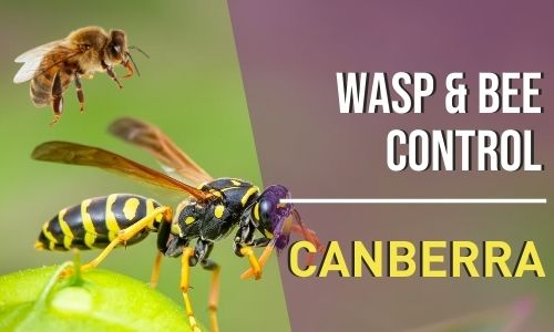 bee-control-Canberra