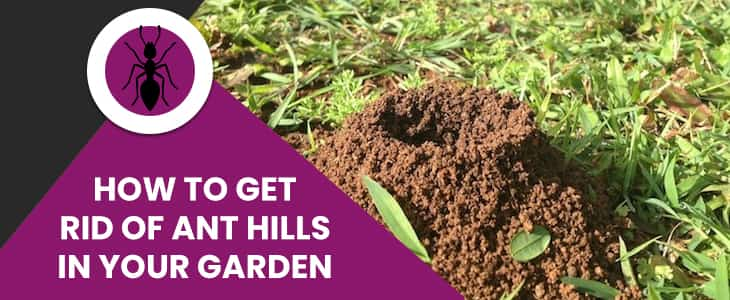 How To Get Rid Of Ant Hills In Your Garden