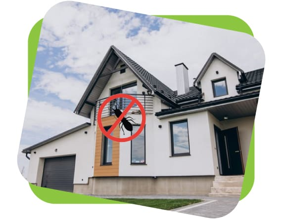 Effective Pre Purchase Pest Inspection