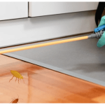 The Benefits of Professional Pest Control Protection